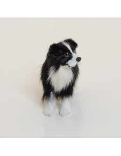 Hund, Bordercollie